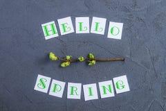 Eenvoudige samenstelling van Hello-de lentekalligrafie het van letters voorzien en branche met jonge spruiten van groen op donker Royalty-vrije Stock Afbeeldingen