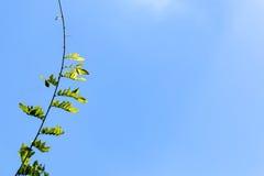 Eenvoudige Tak en Bladeren tegen Blauwe Achtergrond Stock Afbeelding