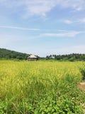 Eenvoudige zelf-gebouwde kleine hut in het midden van padieveld op Mindoro, Filippijnen royalty-vrije stock foto's