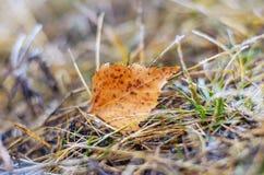 Eenzaam blad. Royalty-vrije Stock Fotografie