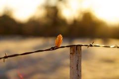 Eenzaam blad Stock Foto