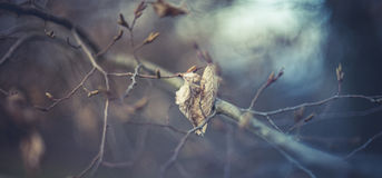 Eenzaam blad op de boom Royalty-vrije Stock Foto