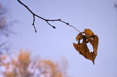 Eenzaam blad op tak Royalty-vrije Stock Afbeelding