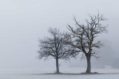Eenzaam bomenlandschap Stock Afbeelding