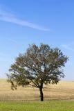 Eenzaam boomlandschap Royalty-vrije Stock Fotografie