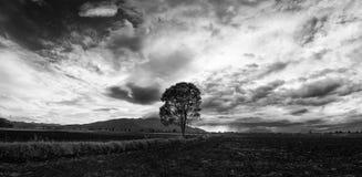 Eenzaam boompanorama Royalty-vrije Stock Foto's