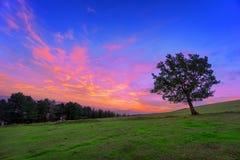Eenzaam boomsilhouet bij dageraad Stock Foto