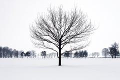 Eenzaam boomsilhouet in de winterpark. stock afbeelding
