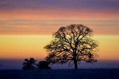 Eenzaam boomsilhouet tegen de gelaagde wolken vóór zonsondergang Stock Afbeelding