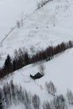 Eenzaam breng in de sneeuw onder Royalty-vrije Stock Foto