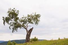 Eenzaam die hout bovenop de berg, met bliksem wordt gebrand royalty-vrije stock afbeeldingen