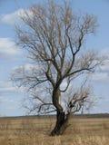 Eenzaam droog hout Royalty-vrije Stock Afbeeldingen