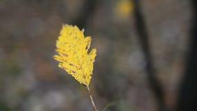 Eenzaam geel blad stock video