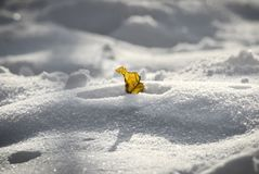 Eenzaam geel blad in de sneeuw stock afbeelding