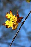 Eenzaam geel blad op een boomtak tegen een heldere blauwe hemel Stock Foto
