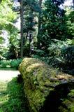 Eenzaam, geklopt die onderaan boomstam met mos wordt behandeld Stock Afbeeldingen