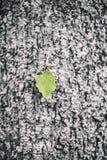 Eenzaam groen blad op zwarte achtergrond Stock Foto