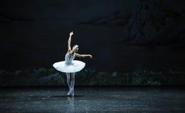 Eenzaam het zwaan-Zwaan oever van het meer-Ballet Zwaanmeer Royalty-vrije Stock Afbeelding