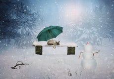 Eenzaam katje onder de paraplu Stock Foto