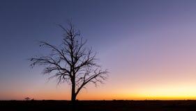 Eenzaam naakt boomsilhouet bij schemer stock fotografie