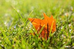 Eenzaam oranje esdoornblad die in groen gras nat van ochtenddauw liggen Close-up royalty-vrije stock foto