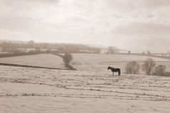 Eenzaam Paard Royalty-vrije Stock Foto's