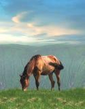 Eenzaam paard Stock Foto