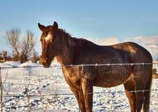 Eenzaam Paard Stock Afbeelding