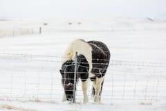 Eenzaam paard III Royalty-vrije Stock Foto's