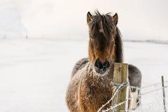 Eenzaam paard V Royalty-vrije Stock Afbeeldingen