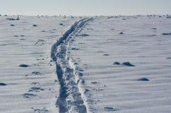Eenzaam skispoor op het gebied Stock Afbeelding