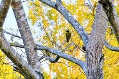 Eenzaam tussen bomen en u royalty-vrije stock afbeeldingen