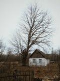 Eenzaam verlaten huis in het dorp Huis dichtbij de grote boom royalty-vrije stock foto's