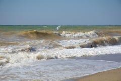Eenzaam zeil in het stormachtige overzees van de zomer Royalty-vrije Stock Afbeeldingen