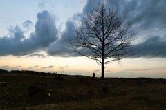 Eenzaamheid Eenzaam Meisje in een eenzame boom tegen de hemel Op de achtergrond van de zonsopgang Rood hart ter beschikking stock fotografie