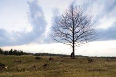 Eenzaamheid Eenzaam Meisje in een eenzame boom tegen de hemel Op de achtergrond van de zonsopgang Rood hart ter beschikking stock foto's