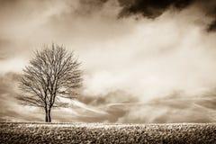 Eenzaamheid status Stock Foto