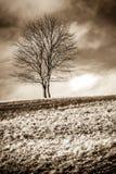 Eenzaamheid status Stock Fotografie