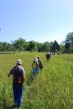 Eenzaamheidlandbouwbedrijf in Auroville Stock Fotografie