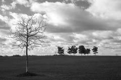 eenzaamheids eenzame boom op het gebied Royalty-vrije Stock Afbeelding