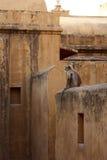 Eenzame aap Stock Afbeeldingen