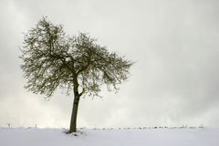 Eenzame appelboom Royalty-vrije Stock Foto