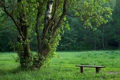 Eenzame bank in ochtendpark stock fotografie