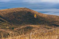Eenzame berkboom op de helling stock foto