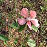 Eenzame bloem Royalty-vrije Stock Afbeeldingen