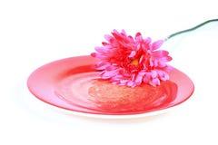 Eenzame bloem Stock Foto