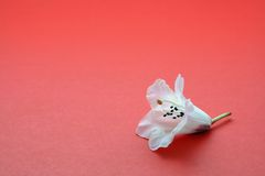 Eenzame bloem royalty-vrije stock foto