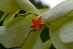 Eenzame bloem royalty-vrije stock afbeelding