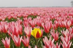 Eenzame bloem Royalty-vrije Stock Foto's