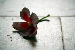 Eenzame bloem Stock Fotografie